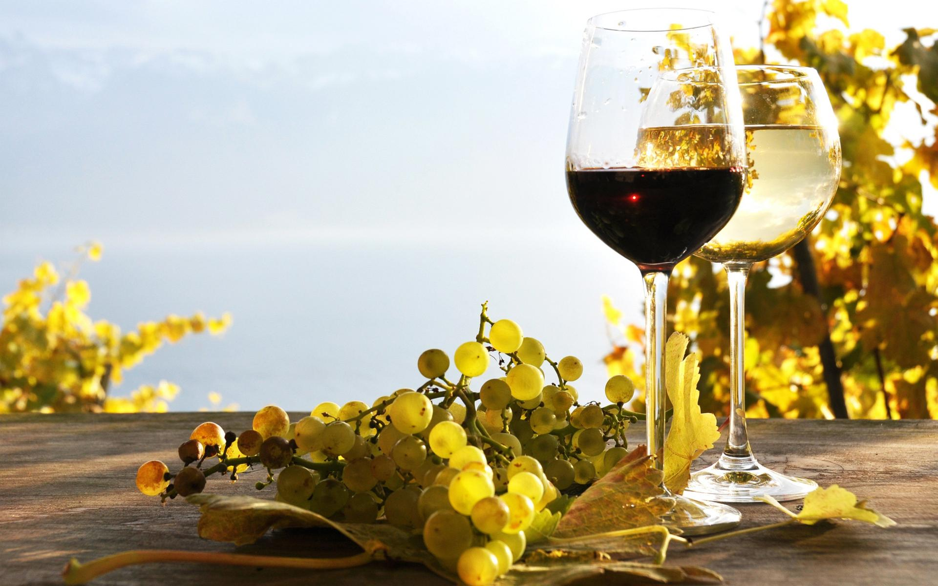 Bulgaria To Host Vine And Wine Congress Next Year